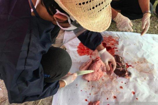 Organ kurban mengandung cacing hati dimusnahkan di Kepulauan Seribu