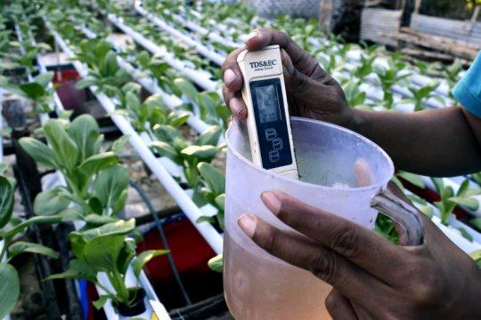 Anggota DPR: Metode hidroponik bantu tunjang ketahanan pangan