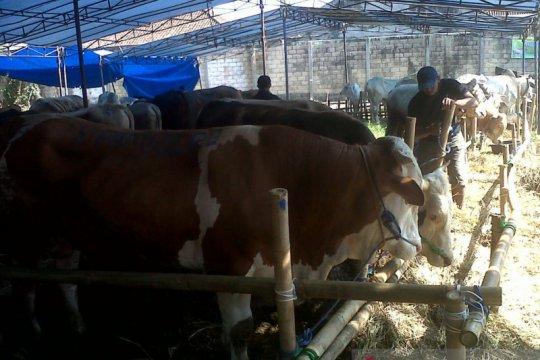 DKP3 Kota Sukabumi temukan daging sapi tak layak konsumsi