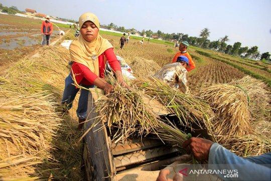 BPS: Nilai Tukar Petani naik 0,49 persen pada Juli