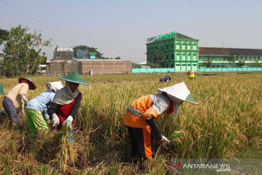 Alih fungsi lahan lumbung padi