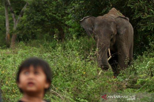 Tim medis PLG rawat dua gajah yang terluka