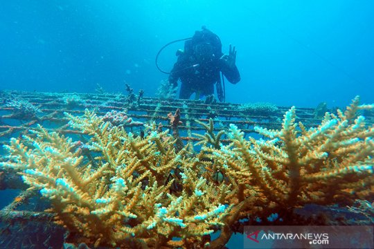 Menristek: Lindungi kekayaan terumbu karang Indonesia