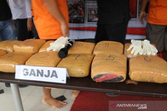 Polres Tangerang Kota sita 14,5 kilogram ganja dari tiga pengedar