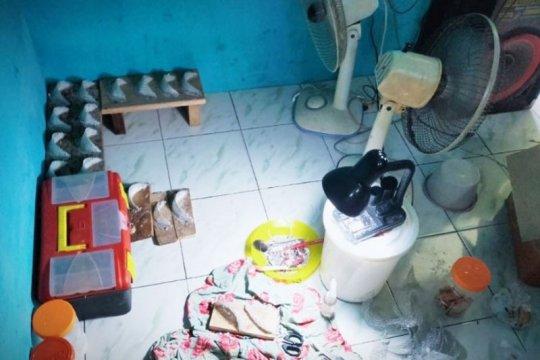 Penipuan sarang walet berbahan mie soun di Kotawaringin Timur