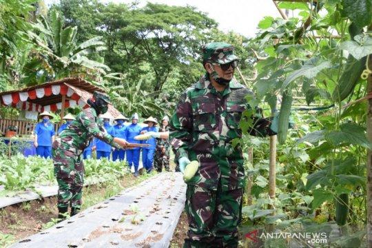 Panen lagi, kebun pangan Lantamal VIII bagi sayur gratis untuk warga