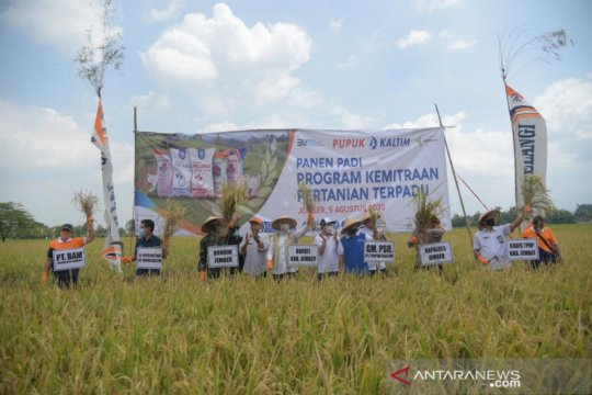 Program kemitraan tingkatkan produksi pertanian di Jember