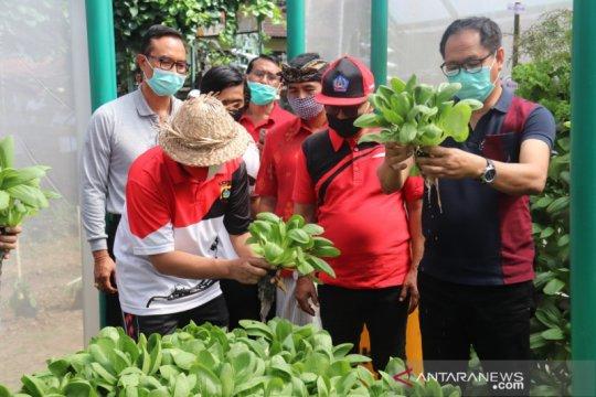 Pemkab Badung komitmen kembangkan pertanian hidroponik