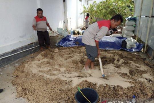 Potensi pasar pupuk organik di Indonesia masih terbuka lebar