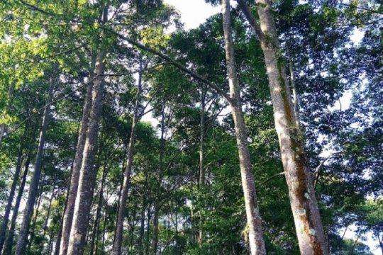 FAO dukung produksi, perdagangan kayu legal di Indonesia