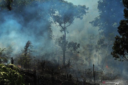 BNPB antisipasi kebakaran hutan lahan lebih dini