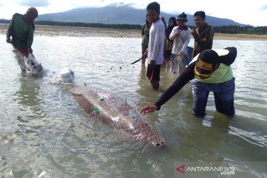 KKP latih warga terkait penanganan biota laut terdampar