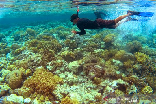 Pariwisata Wakatobi masuk nominasi Anugerah Pesona Indonesia 2020
