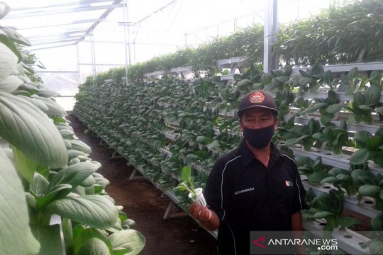 Pertanian hidroponik di Rejang Lebong menjanjikan