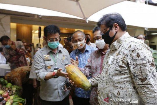 Tingkatkan ekspor, Kementan perkuat budi daya varietas buah tropis