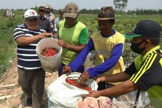 Temuan legislator, petani cabai dan kopi butuh bantuan modal