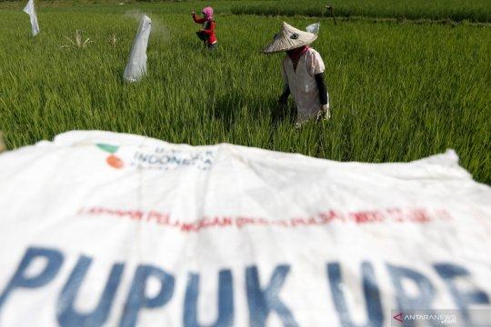 Bantah kelangkaan, distributor keluhkan kurangnya kuota pupuk subsidi
