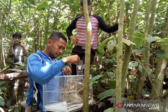 BKSDA Resor Agam lepasliarkan kukang di Cagar Alam Maninjau
