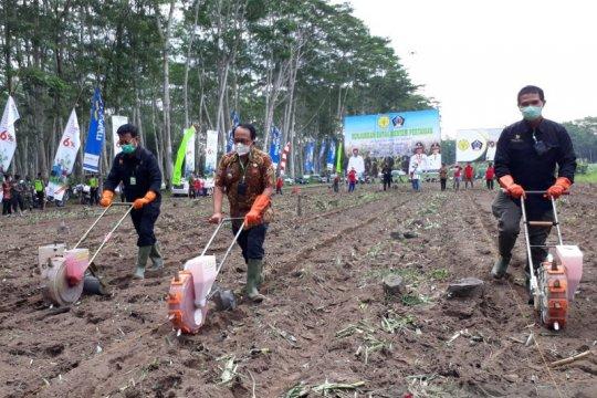 Menteri Pertanian tanam jagung di Blitar
