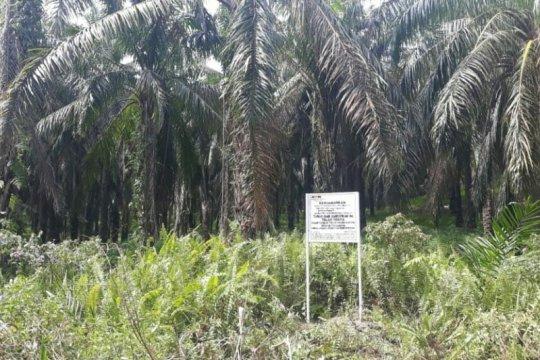 KPK: Luas lahan sawit yang disita terkait kasus Nurhadi 530 Hektare