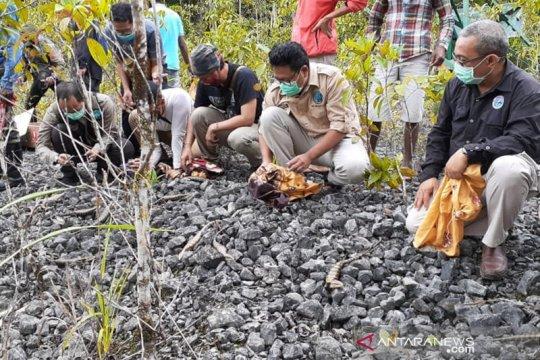 BKSDA Maluku lepasliarkan puluhan satwa endemik