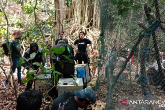 BKSDA lepasliarkan 40 monyet ekor panjang di Pulau Nusa Barong
