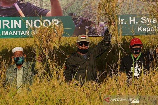 Produksi padi Kalsel capai satu juta ton