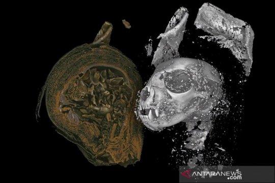 Ilmuwan periksa isi mumi kucing, ular, dan burung Mesir kuno
