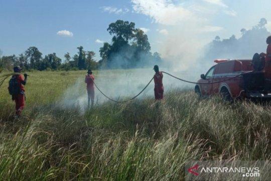 Kawasan Taman Nasional Rawa Aopa terbakar