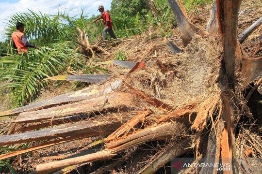 Gajah liar rusak perkebunan warga di Aceh Barat