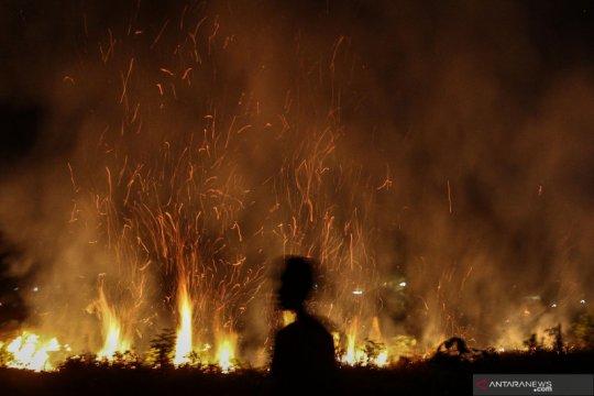 Kebakaran lahan di Pekanbaru