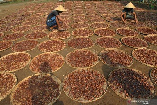 Rempah-rempah sempat jadikan Jawa kosmopolitan di Nusantara