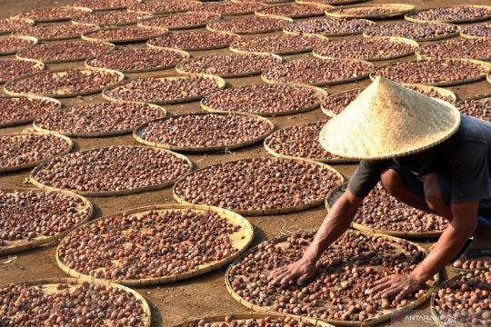 Peneliti sebut RUU Cipta Kerja buka peluang investasi sektor pertanian
