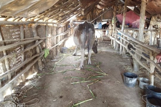 Polisi selidiki dugaan kerbau hilang di lokasi semburan lumpur Blora