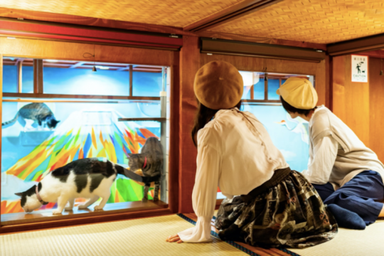 Rihat sambil pandangi kucing di hostel unik Osaka