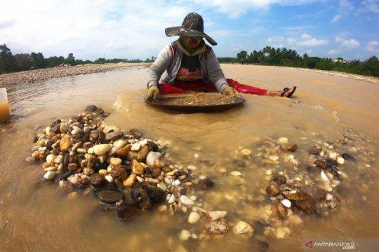 Penambang emas tradisional di Jambi