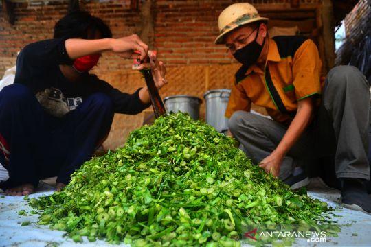 Inovasi fermentasi eceng gondok sebagai pakan ternak alternatif