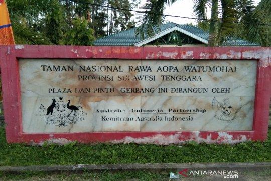 Sebanyak 19 ekor Anoa ada di Taman Nasional Rawa Aopa