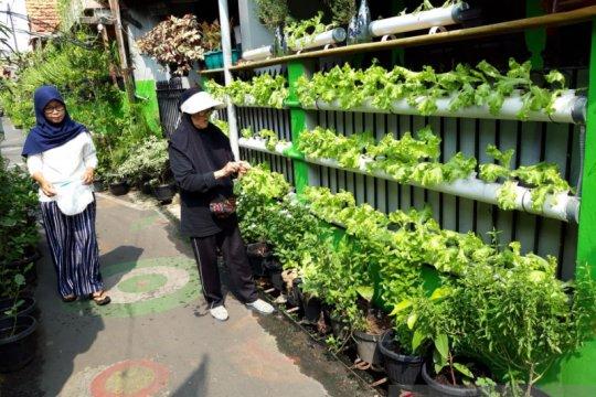 Konsumsi sayur di tengah pandemi masih rendah