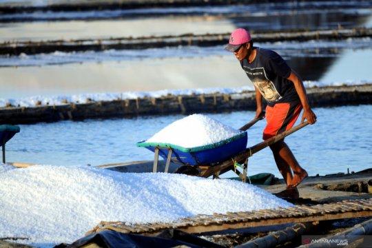 Kemarin, Presiden izinkan impor garam industri hingga padat karya