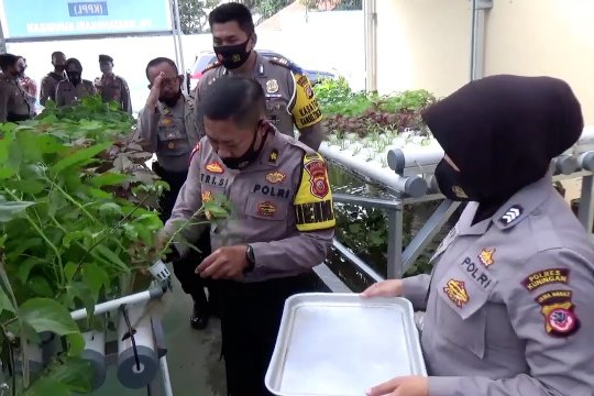 Polres Kuningan kembangkan hidroponik bantu ketahanan pangan