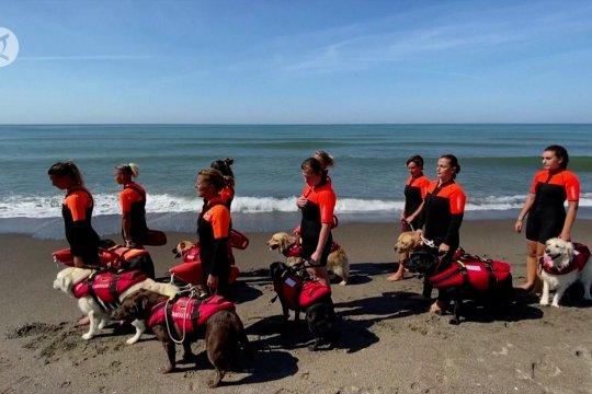 Betapa profesionalnya para anjing penjaga pantai di Italia