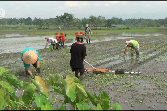Dampingi ilmu titen petani, BMKG gelar Sekolah Lapang Iklim di Gunungkidul