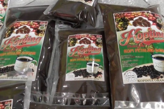 Kopling Banjar, budidaya kopi robusta khas Babel