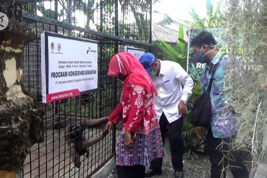 Upaya pelestarian bekantan di Kota Banjarmasin
