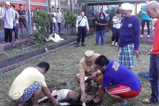Warga Binaan Pemasyarakatan turut menyumbangkan hewan kurban