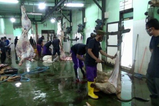 Permintaan pemotongan hewan kurban di RPH meningkat drastis
