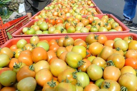 BMKG latih petani tomat pahami iklim