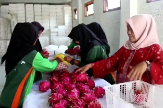 Ekspor buah Indonesia melonjak drastis di masa pandemi