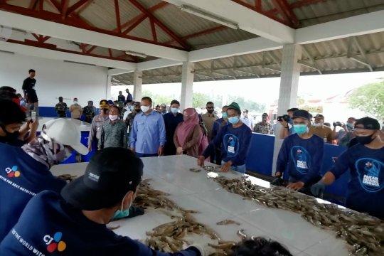 Menteri KKP lakukan panen udang vaname di Pandeglang
